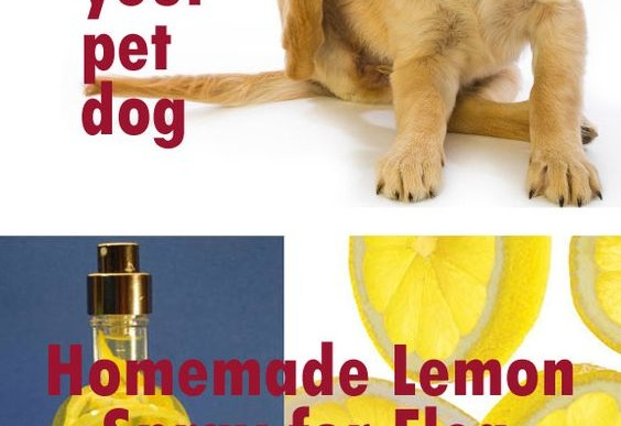 Health logging mixed feeds page 16 - Home remedies to keep fleas away ...
