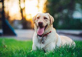 Why to Hire the Pet Photographer?